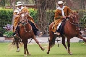Peruvian Paso Horse Festival
