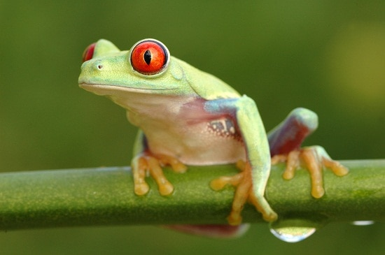 Green Frog in tree