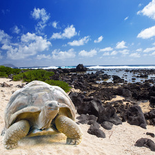 Affordable Galapagos & Peru (9 Days)