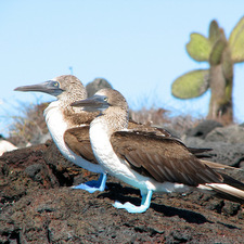 Galapagos & Peru Combined (13 Days)