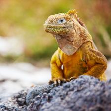 Machu Picchu & Galapagos Vacations