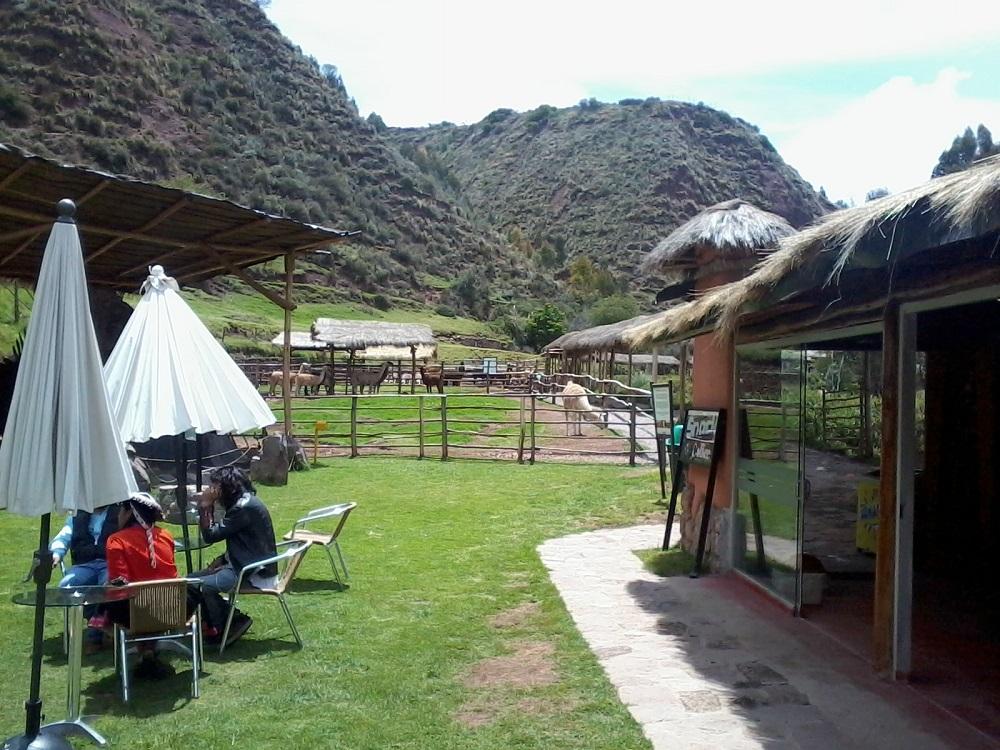 Alpaca Farm in Cusco Peru