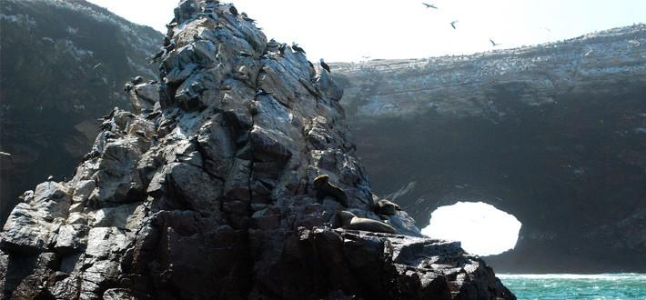 Marine wildlife resting on a cliff face at las islas ballestas